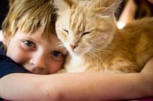 enfant et chat animal de compagnie